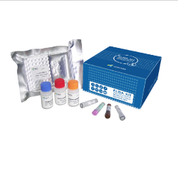 点击查看商品:EHC158.96 Human Thrombopoietin(Tpo) ELISA kit(人促血小板生成素)